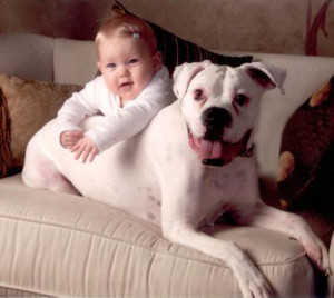 The Many Benefits of Having a Pet in Your Family – Especially a Dog!