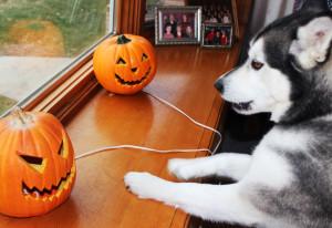 ella pumpkins